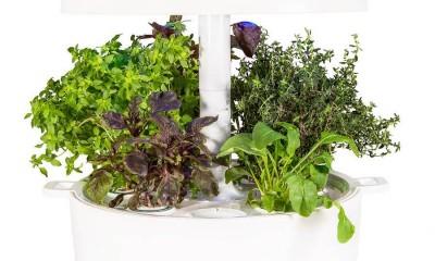 Plantui - išmanus sodas